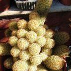 Collecion de Cactusero25