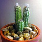 Collecion de Cactusero87