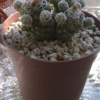Collecion de CactuseroJunior