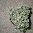 Collecion de CactuseroJunior