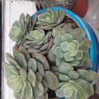 Cactusita27-44842