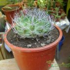 Collecion de FCO_cactus_fan
