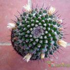 Collecion de Juanmanuel-S-M-