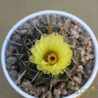 Collecion de Leticactus
