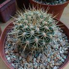 botanica-44522