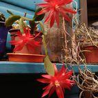 Collecion de botanica