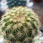 Collecion de cactus-es