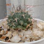 cactus-43426