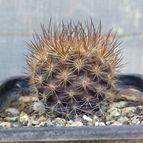 cactus-44020