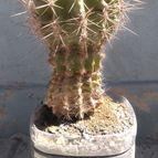 cactus-44091