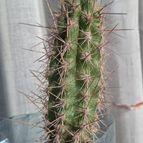 cactus-44520