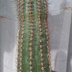 cactus-44605