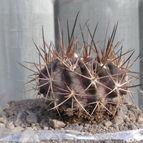 cactus-44937