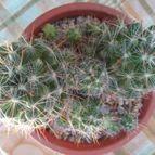 cactus-45367
