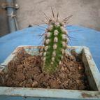 cactus-45821