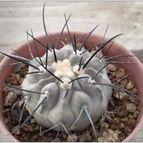 cactus-45879