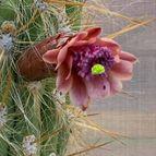 47569 cactus
