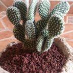 Collecion de cactus123
