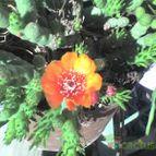Collecion de caritopatagonia