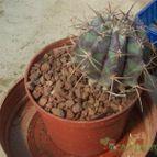 Collecion de davidcactus