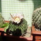 Collecion de floresdecactus