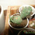 Collecion de gabrielcactus
