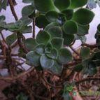 Collecion de lauranatalia