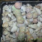 Collecion de liliana1753