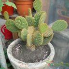 Collecion de patocactus