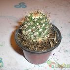 Collecion de pushingcactus