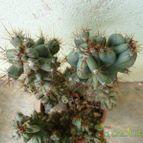Collecion de yunicactus