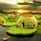 cariocactus