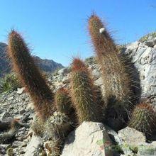 Fotografía tomada por cactus-es