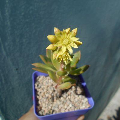 Fotografía tomada por Kaktus-grys