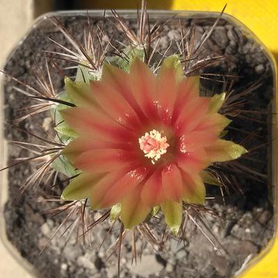 Fotografía tomada por cactus