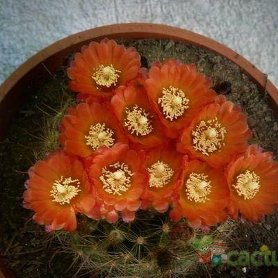 Fotografía tomada por cactushansi